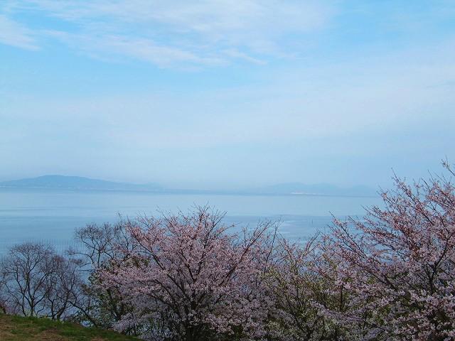 春には桜の花