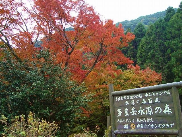 多良岳水源の森 紅葉